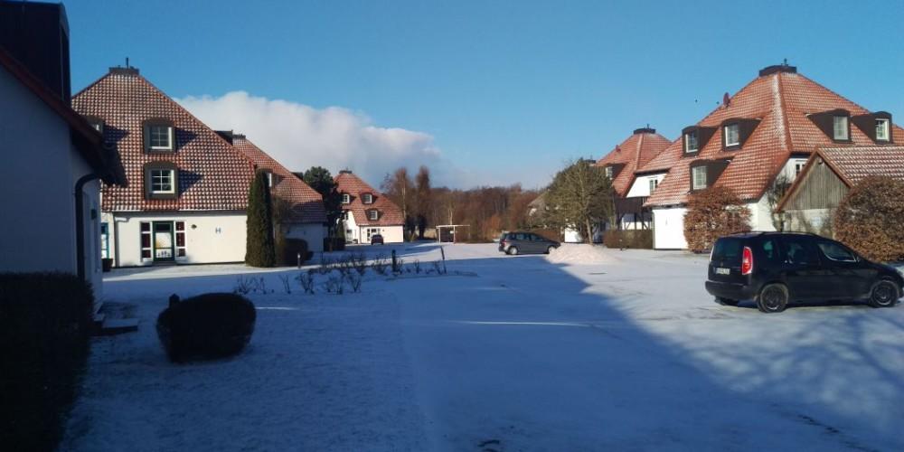 Kormoran im Schnee
